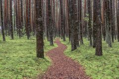 forest-pathway-beautiful-brown-path-rain-89658974