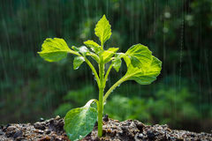 green-sprouts-rain-seedling-agriculture-new-life-concept-little-plant-grow-over-back-soil-sunlight-water-drop-92715844